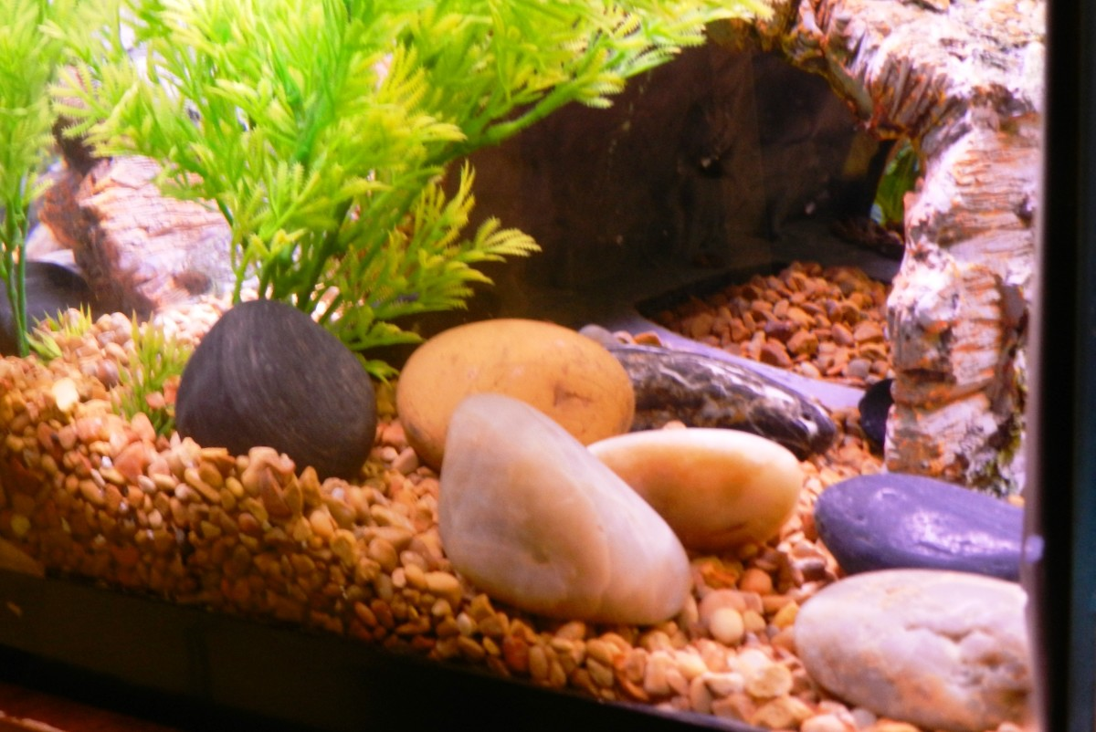 Cycling your tank allows time for healthy colonies of bacteria to develop in the substrate, on the rocks, decorations and even in the filter.