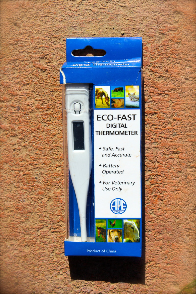 Sample veterinary thermometer.