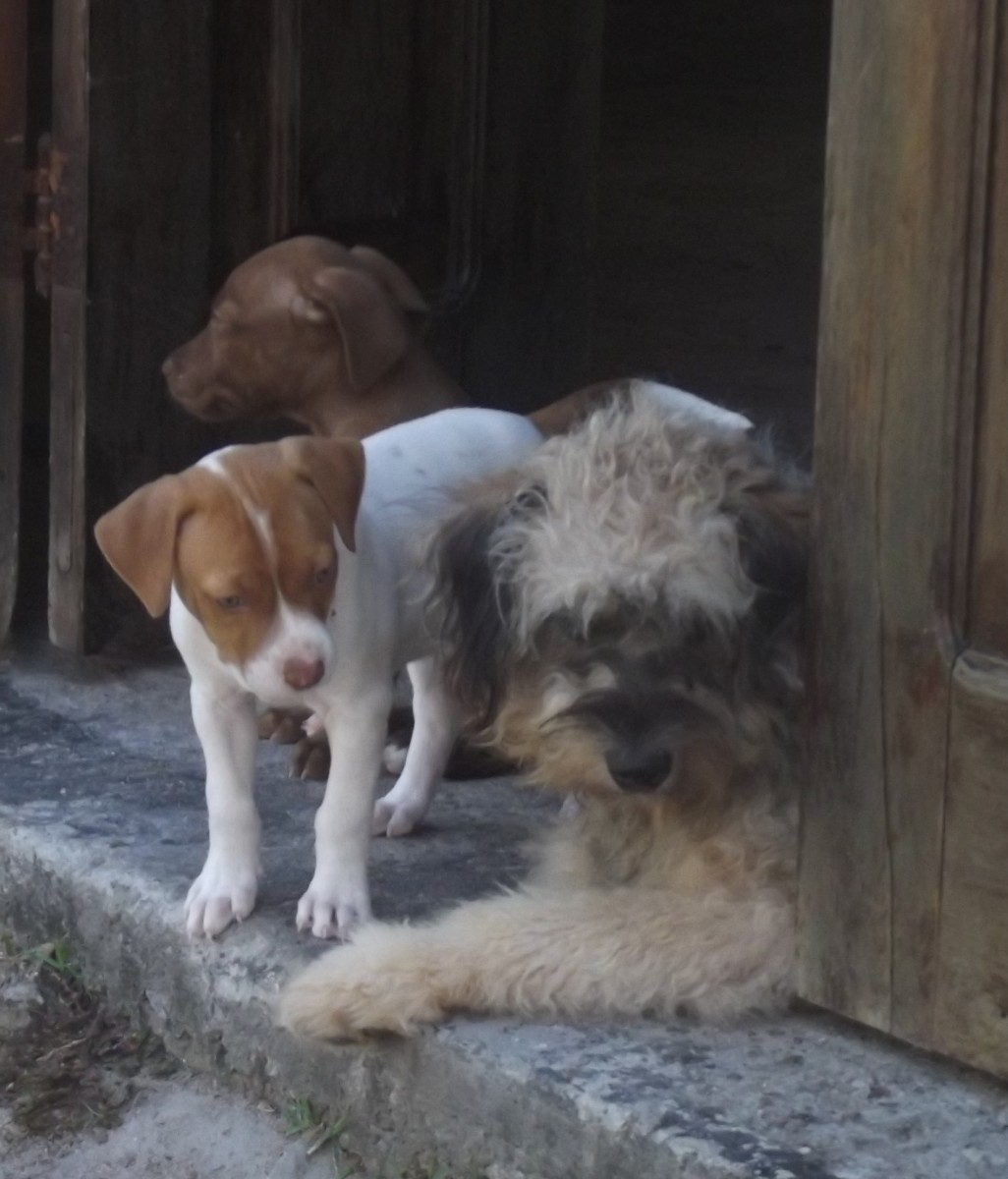 Having an open door makes housetraining go easier; having an older dog to teach right from wrong makes things that much smoother.