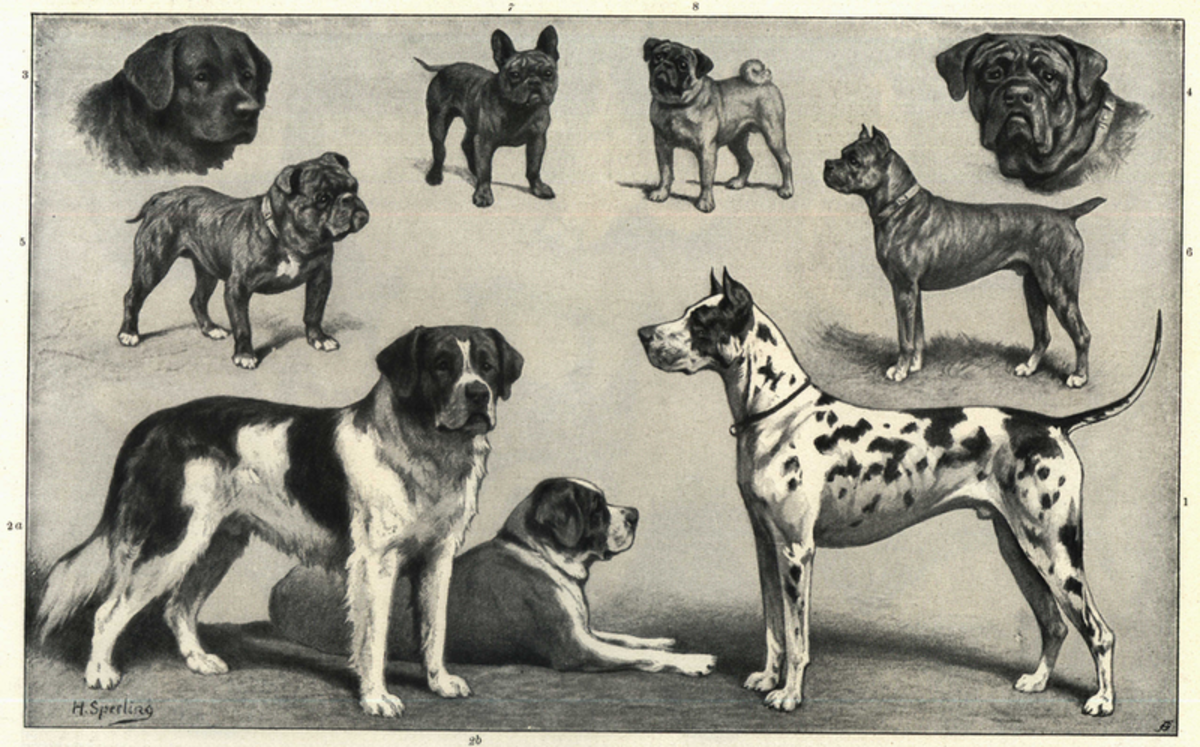 Dogs come in all heights and weights.