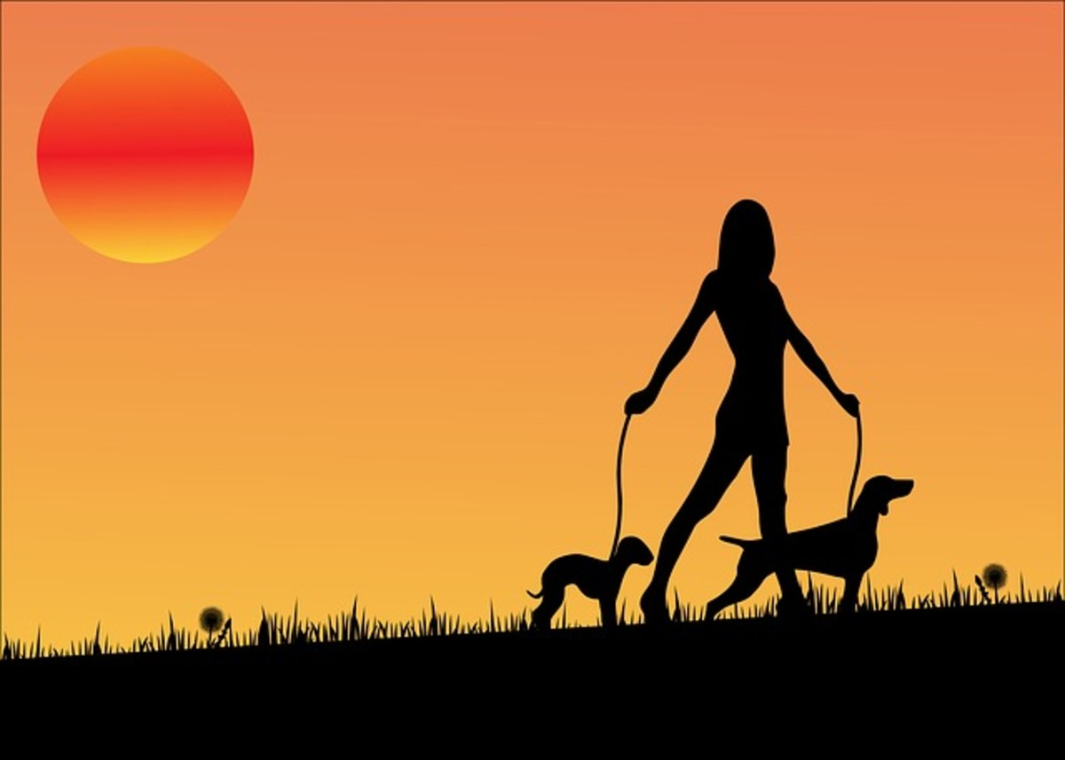 What are the causes of your dogs rashes if the rashes aren't caused by chicken pox?