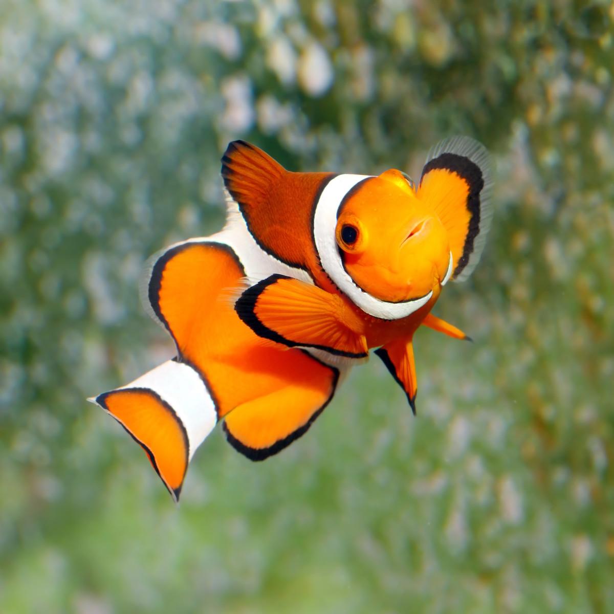 funny-fish-names