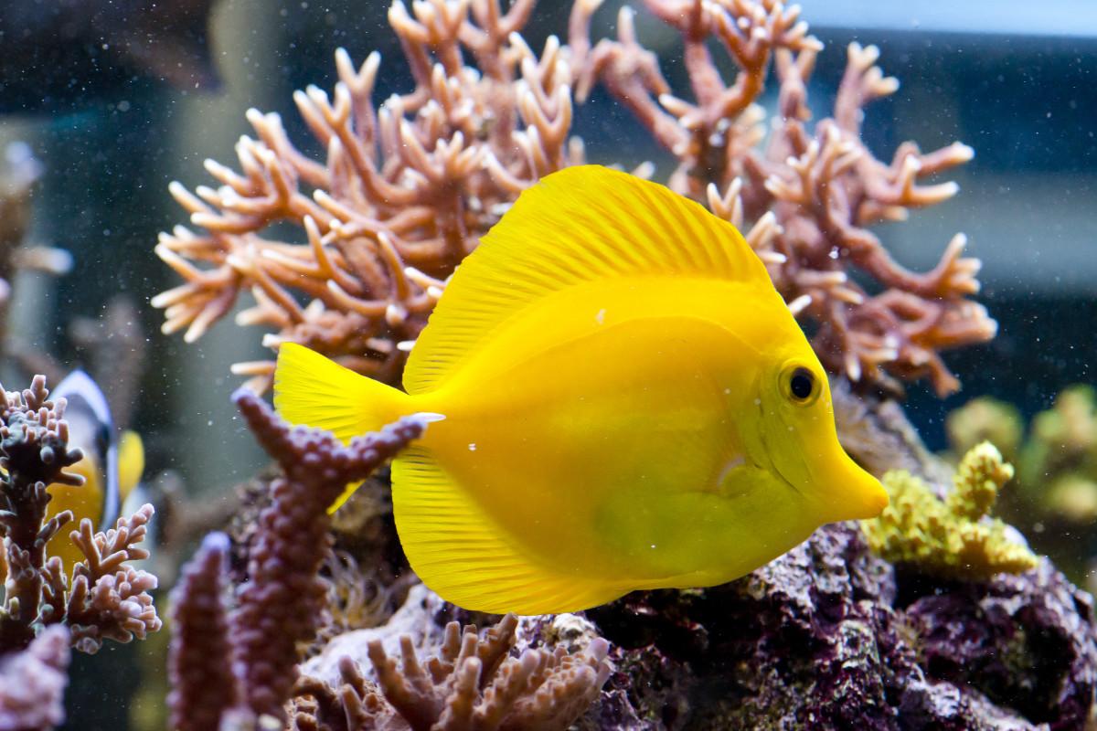 60 funny fish names pethelpful for Salt water fish pets