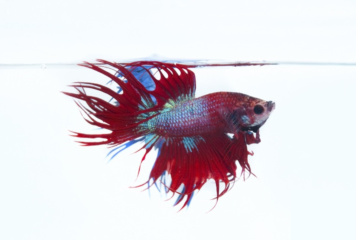 Beta fish should be isolated from other fish. They aren't called Siamese fighting fish for no reason!