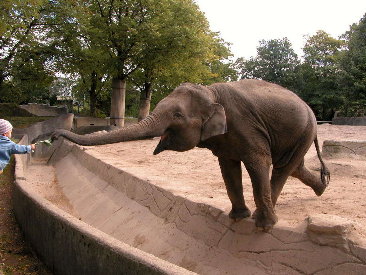 Top 10 most dangerous legal exotic pets pethelpful usa captive elephant publicscrutiny Gallery