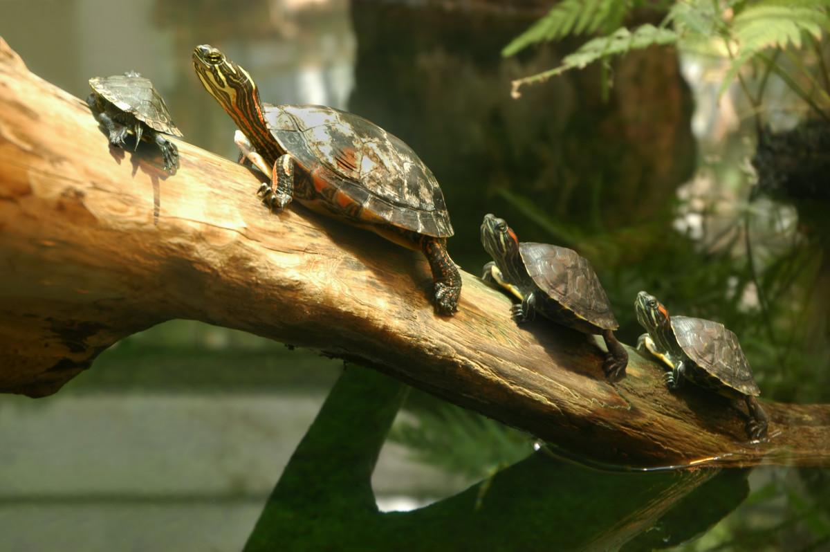 R Turtles Good Pets 40 Pet Turtle Names   ...