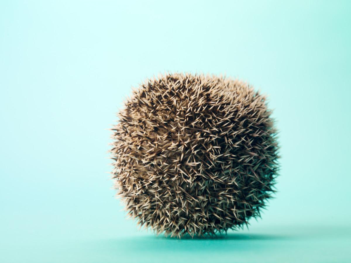 Prickly ball of fun!