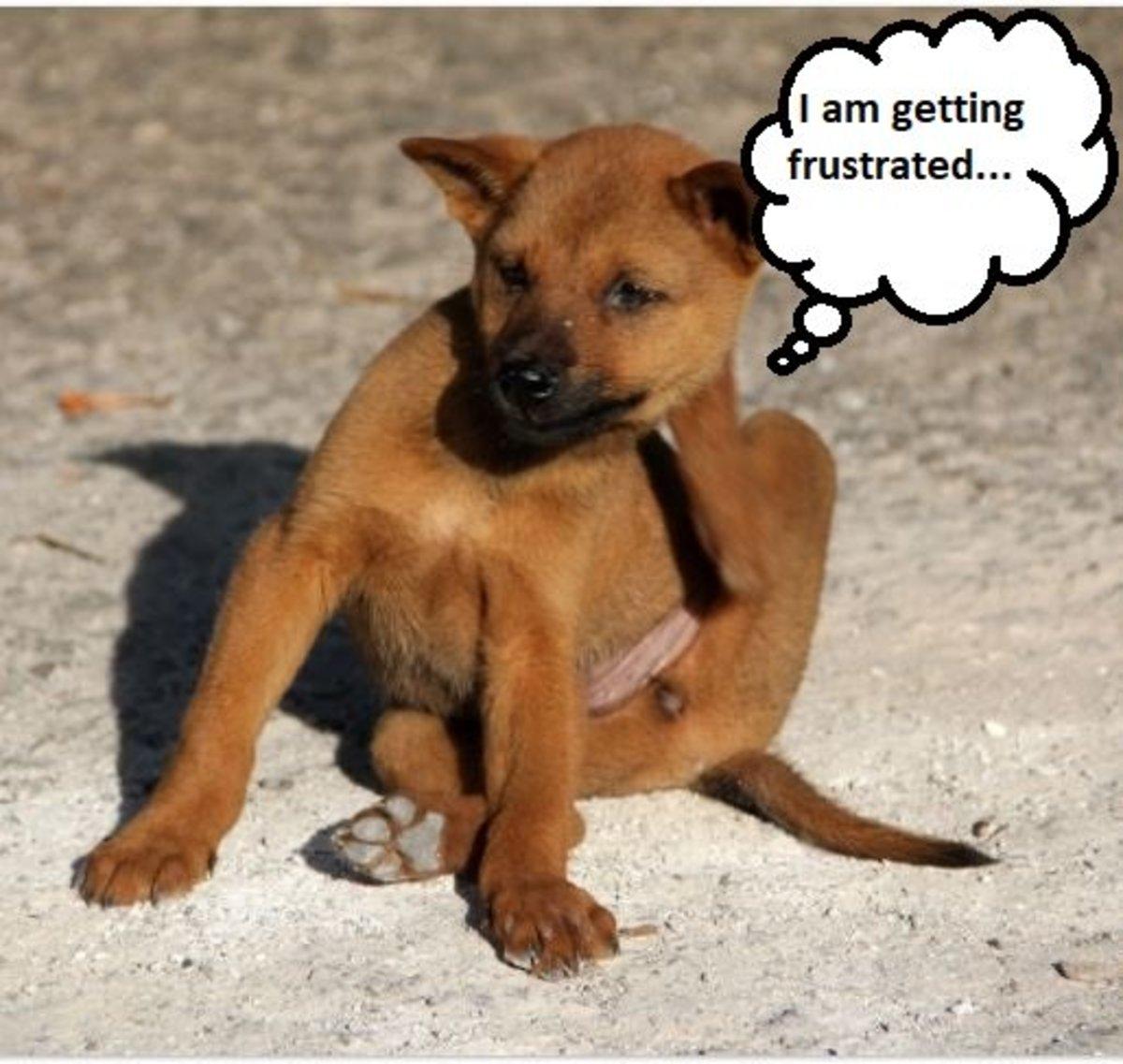 understanding-dog-frustration-tolerance