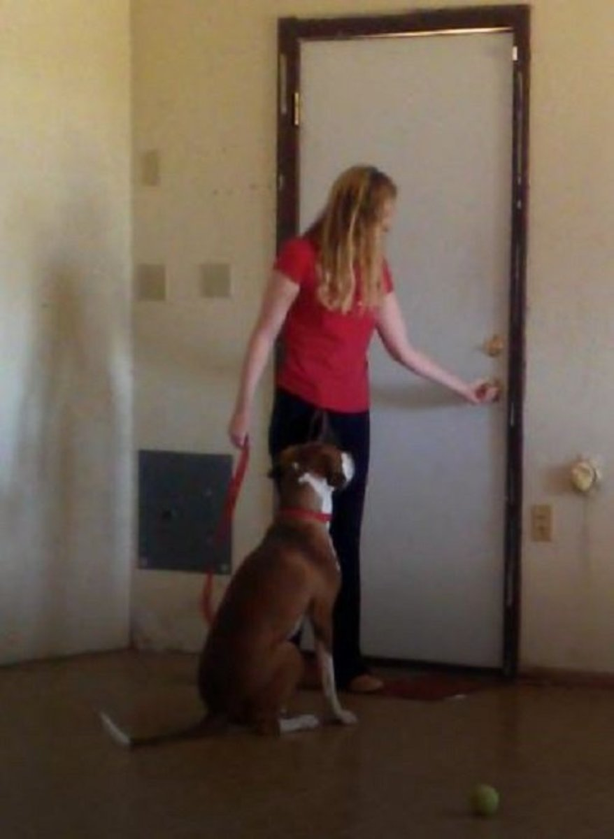 Impulse Control Dog Training: Sitting Nicely at the Door