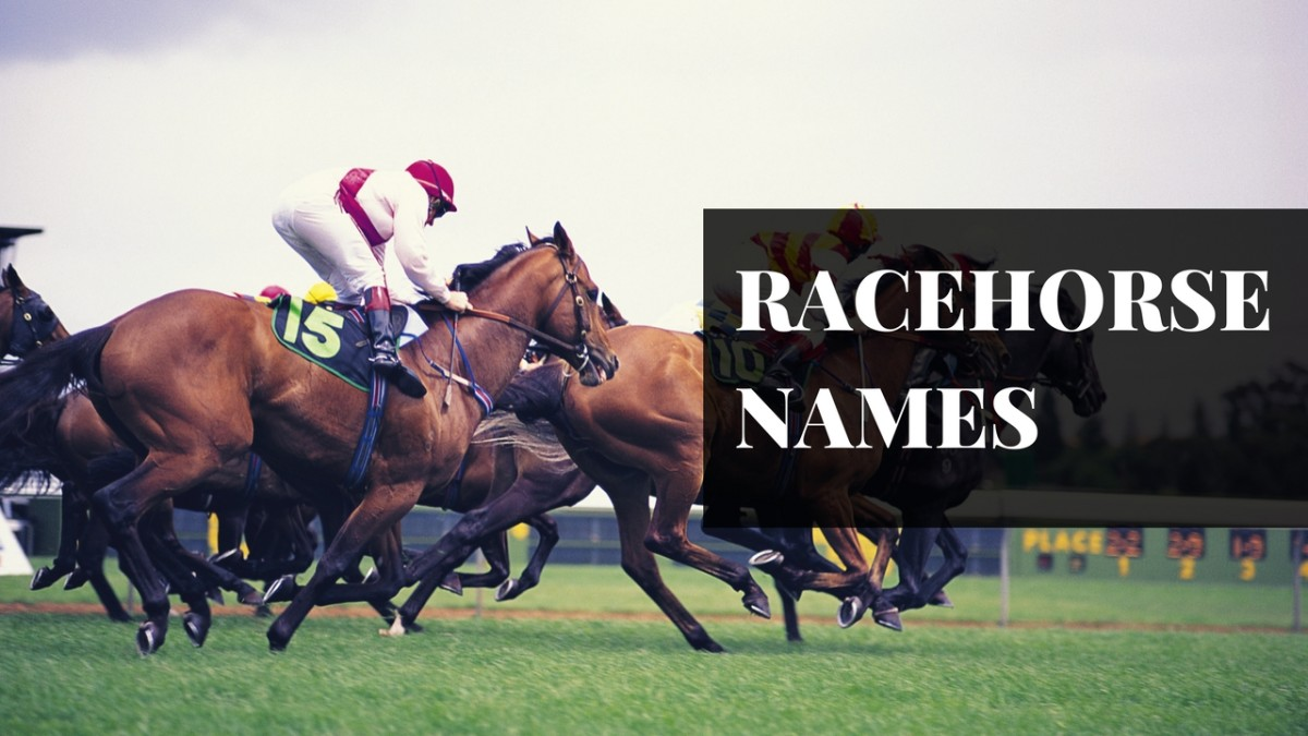 250+ Awesome Horse & Racehorse Names   PetHelpful