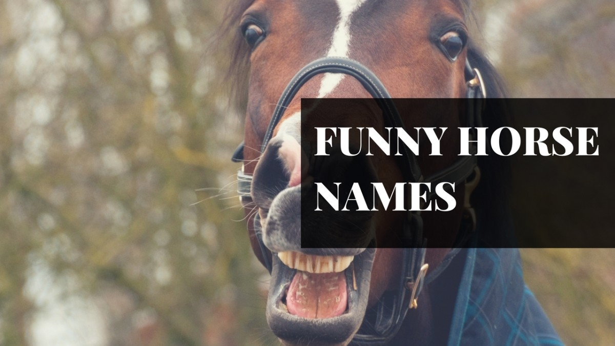 250+ Awesome Horse & Racehorse Names | PetHelpful