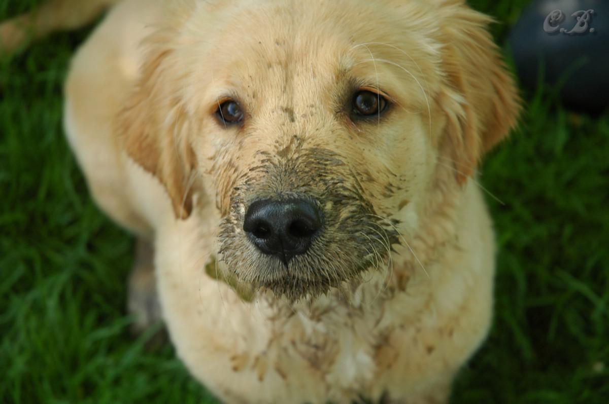 Sweet, innocent, muddy face.