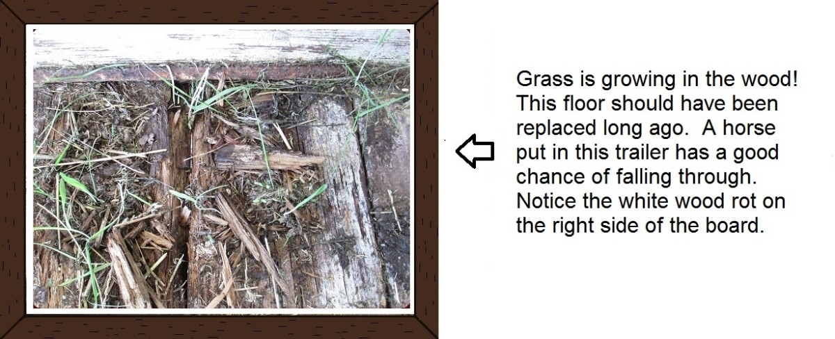 If floorboards show signs of weakness such as grass or fungus growing, it's time to replace the boards.