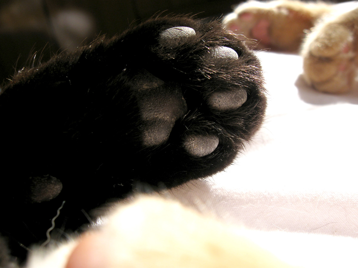 These paws are kissable.  THey've been washed and washed more than yours!