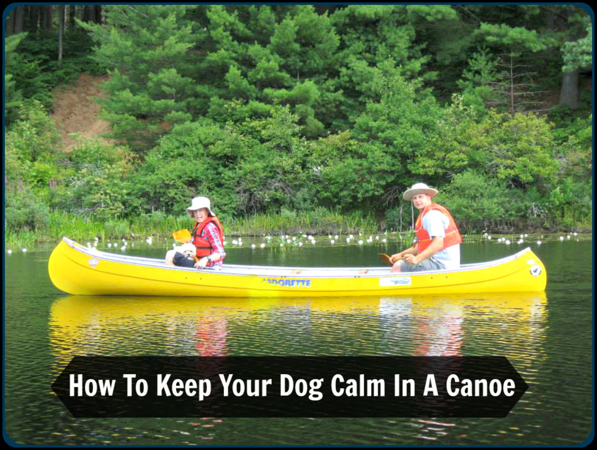 With a little bit of preparation and patience, your pooch can learn to feel comfortable in a canoe. This is myself, my husband Jason and Rufus during a canoe outing in Algonquin Provincial Park.