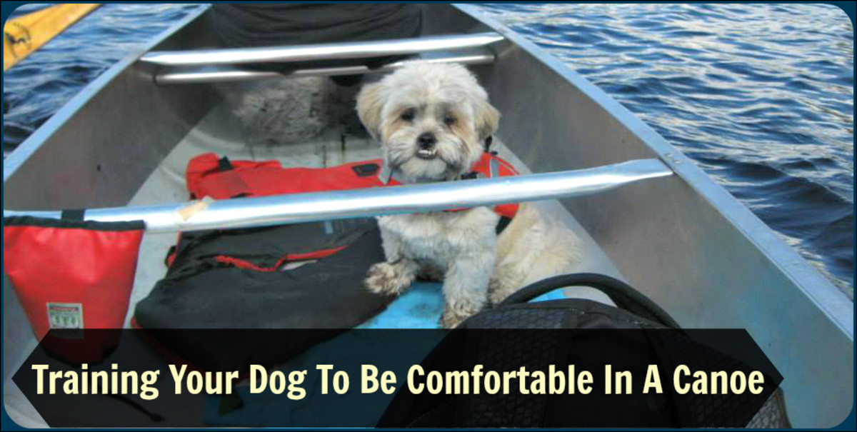Familiarizing your dog with your canoe while it's still on dry land is the first step to achieving your goal of a calm dog who won't panic out on the water.