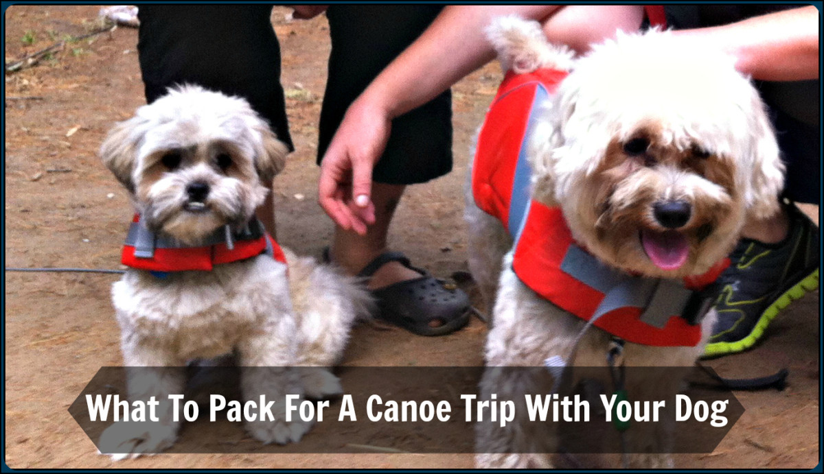 Don't forget to put a life jacket on your dog before heading out in the canoe. Rufus (right) and Tucker (left) getting comfortable in their life jackets before our paddle.
