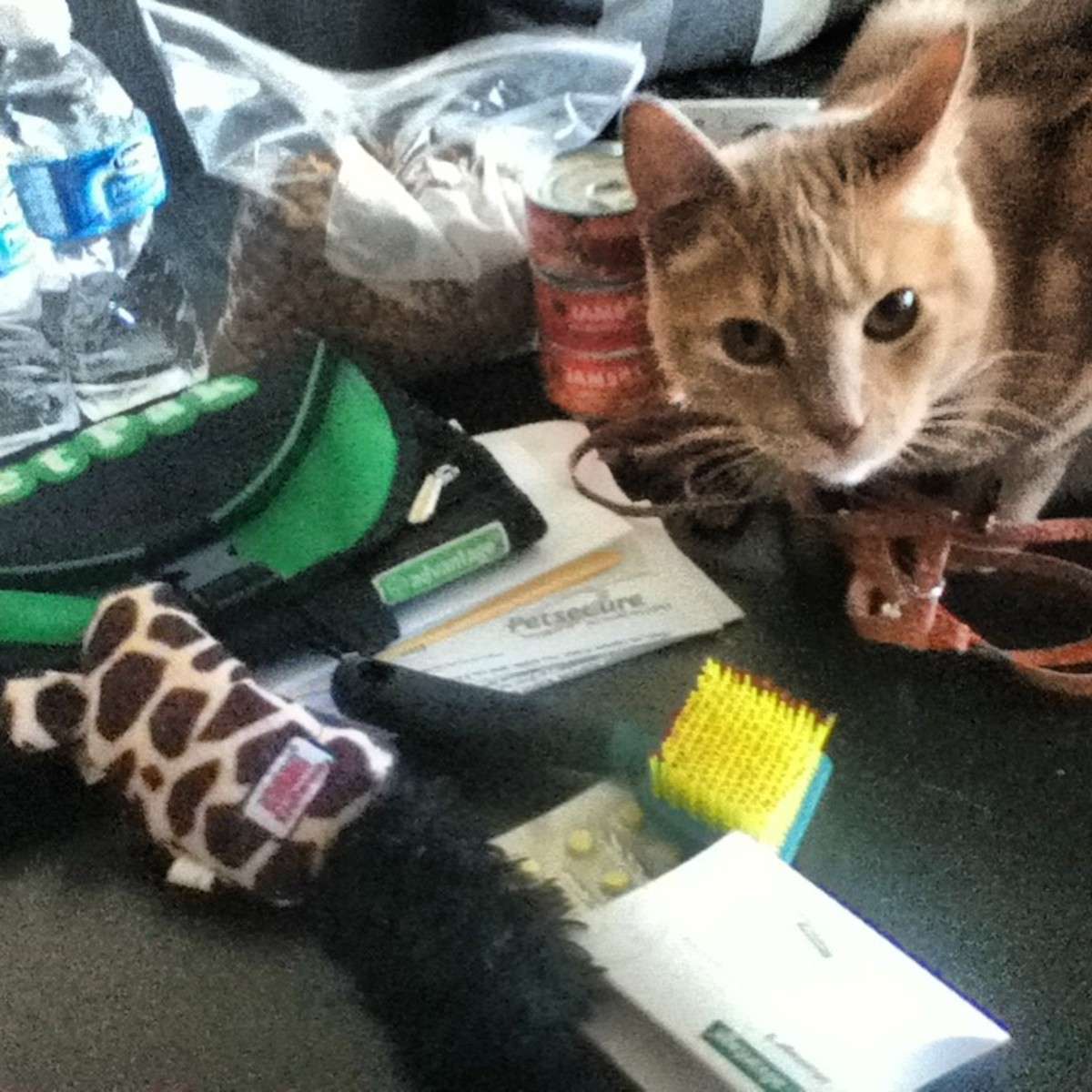 """Mom! Here are some of the things I want you to bring with us in an emergency! Don't forget my favorite toy mouse!"""