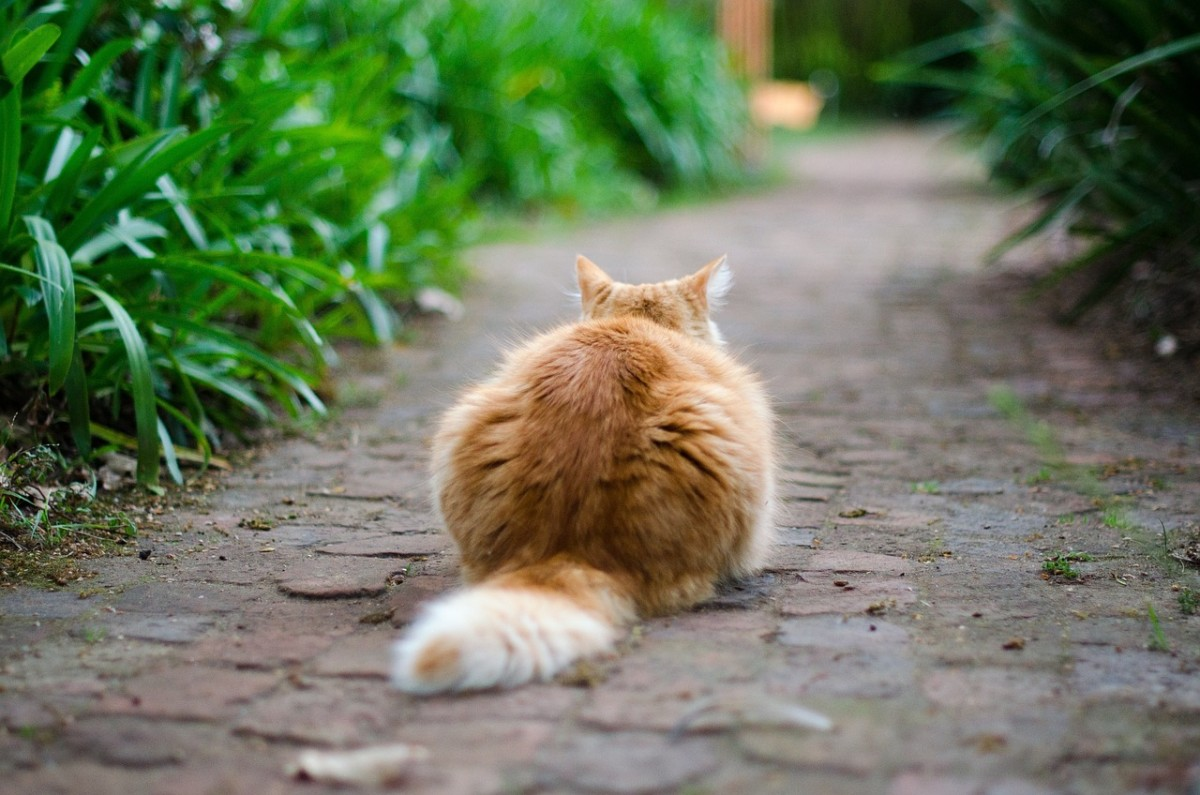 If your cat's tail is down, it could mean that they're focused on something. . .Shhh!