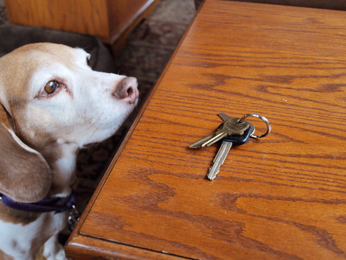 Reducing the contrast between your presence and your absence and avoiding making a big show of coming and going will help alleviate your pup's separation anxiety.