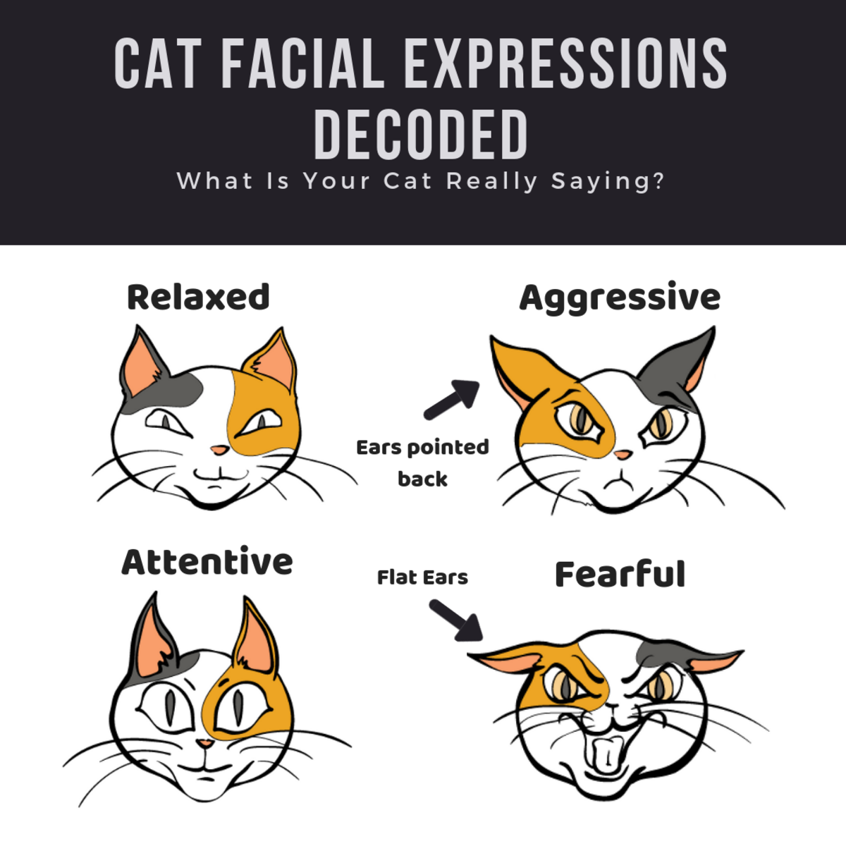 How to decode your cat's facial expressions.