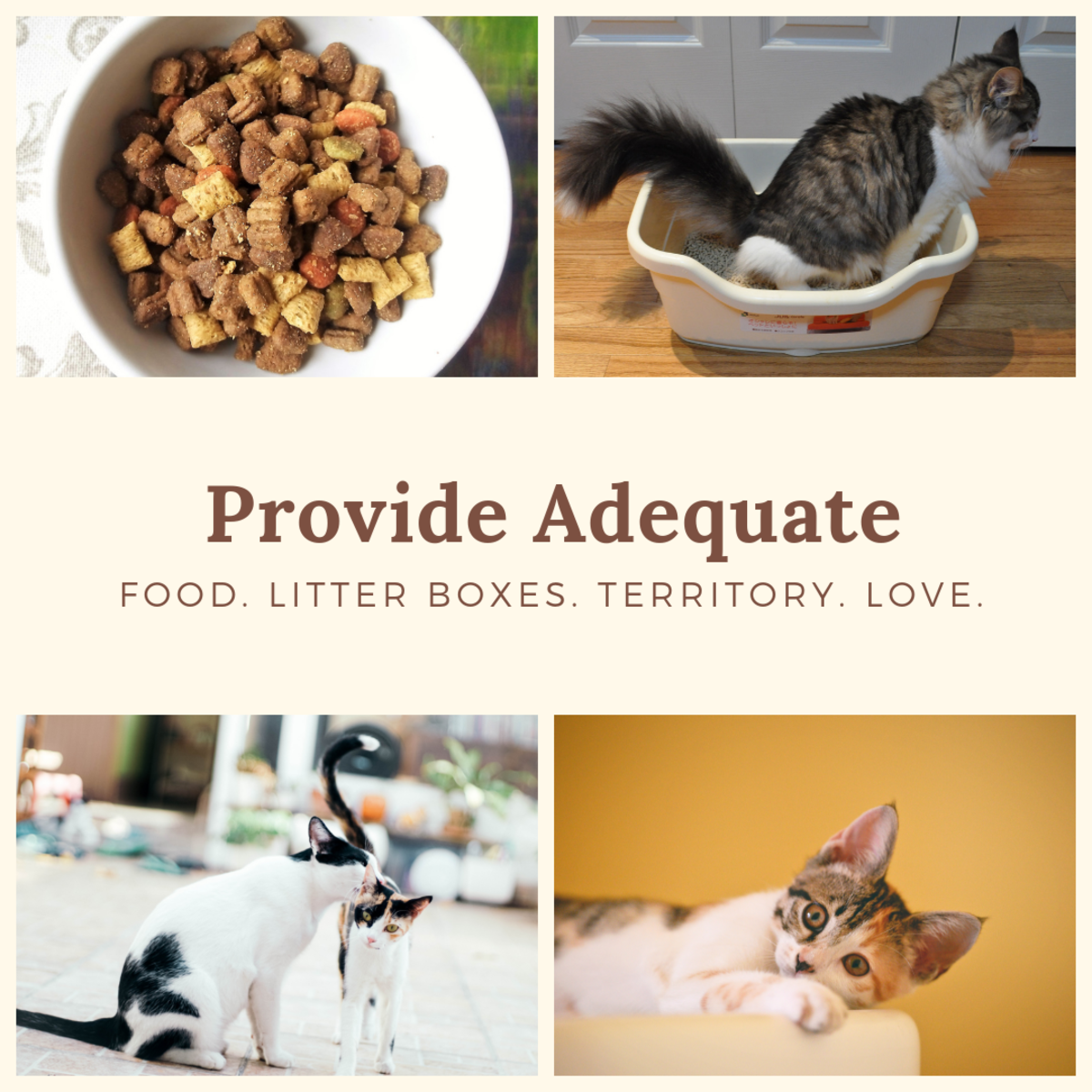 To prevent conflicts in multi-cat households, provide enough of the essentials.