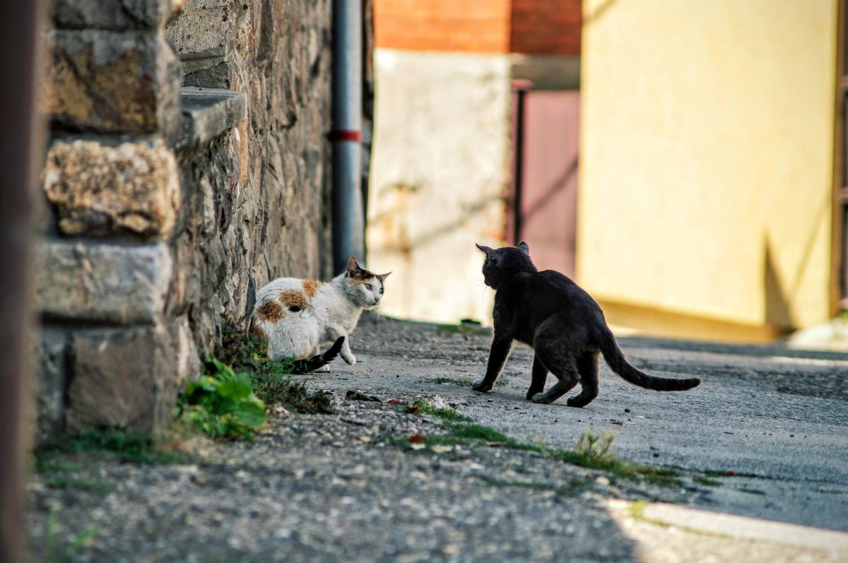 Cats are solitary by nature but have adapted to domestication.