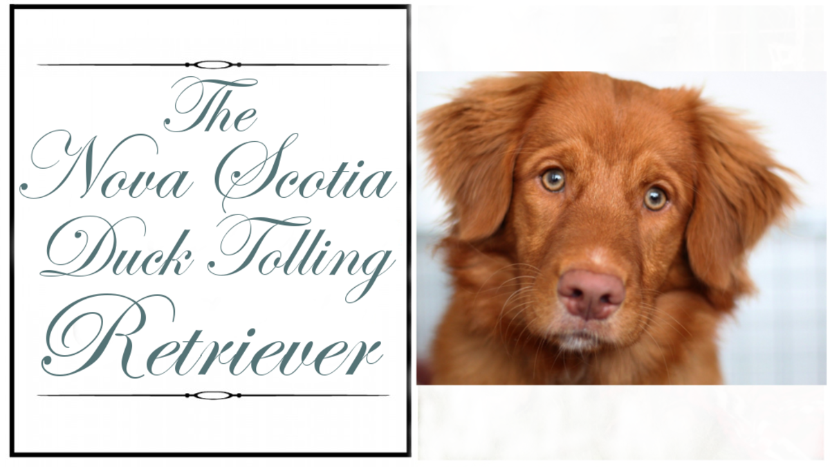 breaking-down-the-retrievers