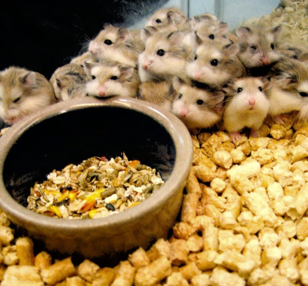 Rodents breed profusely