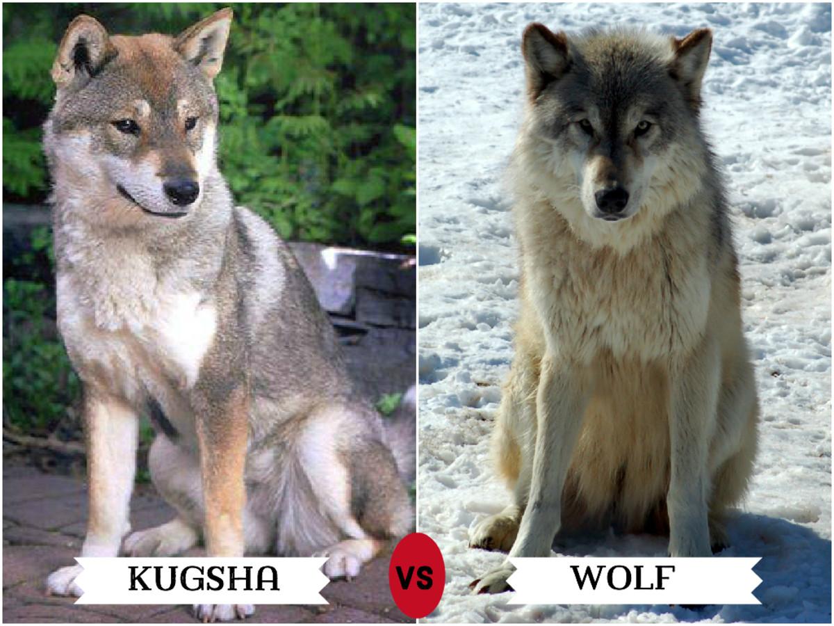 Kugsha (left)