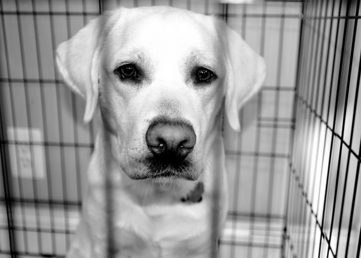 For some dogs, having a safe place like a crate helps to reduce their stress and anxiety.