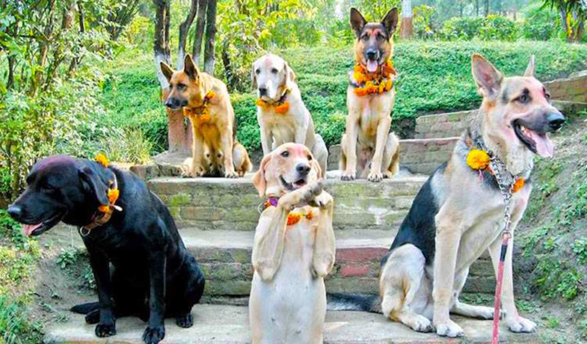During Kukur Puja, the second day of the Tihar festival in Nepal, dogs are fed and worshiped by revelers in honor of the god of death.