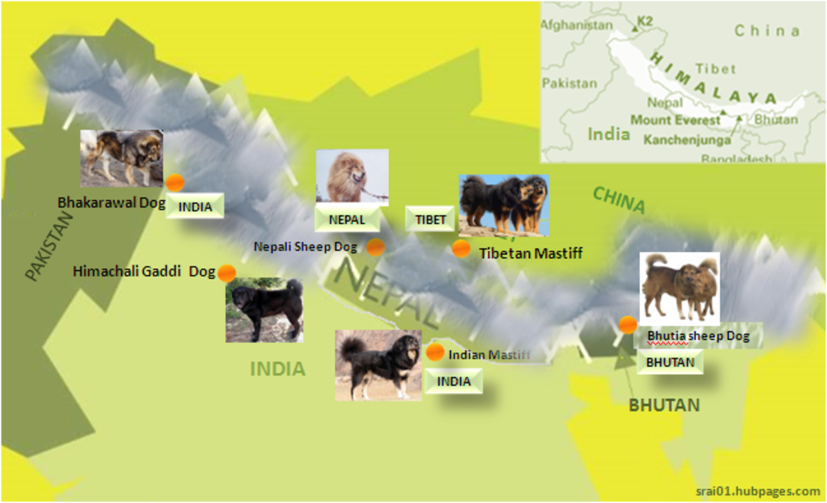 These are some of the most popular Himalayan dogs from India, Nepal, Bhutan and Tibet.