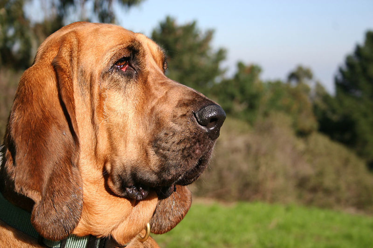 The Bloodhound wins the Ultimate Sniffer contest!