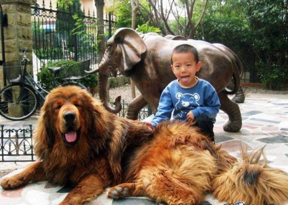 Nepali Mountain Dog