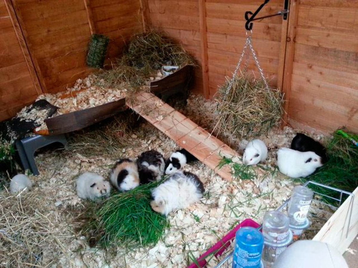 The perfect indoor cage - with lots of room, companions, hidey holes and a variety of food.