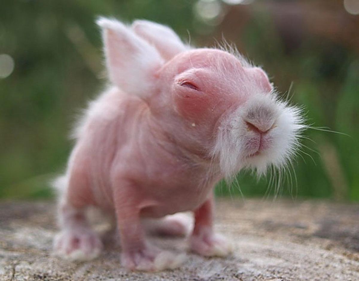 A hairless rabbit? WHATTT??