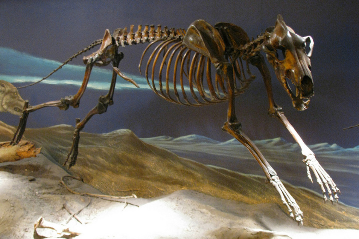 The dire wolf is now extinct.
