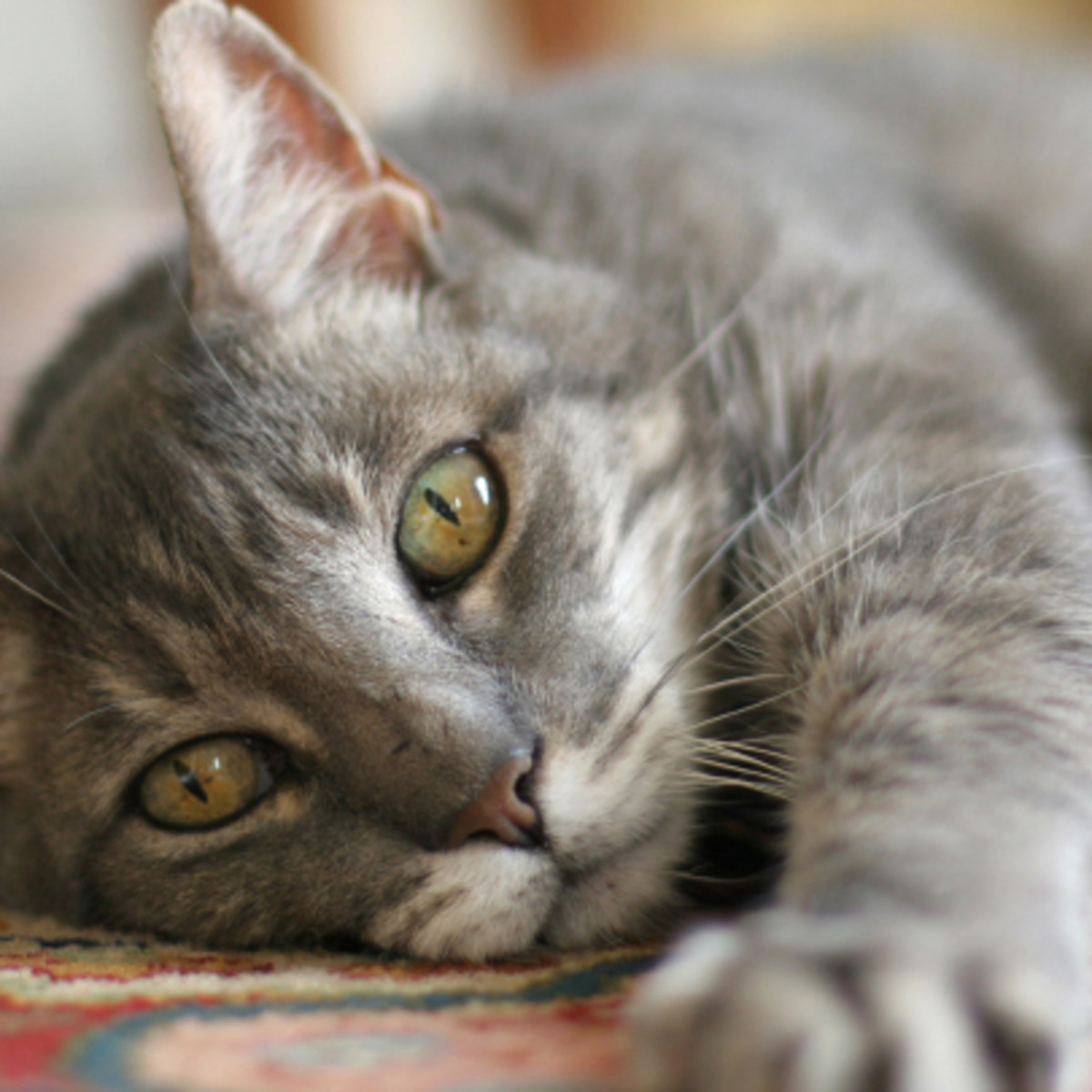 Although there is a FIV vaccine available, it is not 100% effective. Be sure to take other preventative measures.