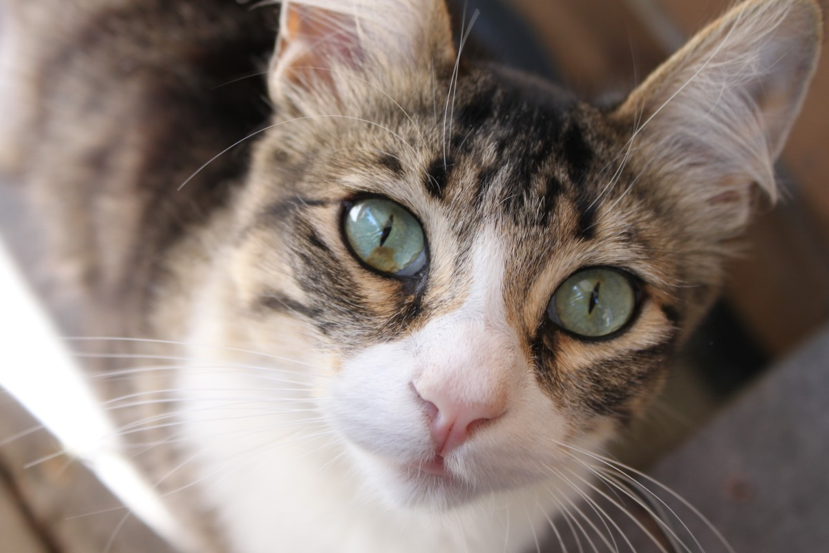 Before introducing a new cat to your household, be sure to get them tested and vaccinated.