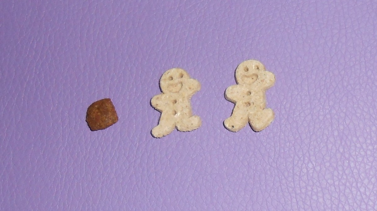 Cloud Star makes Itty Bitty Buddy Biscuits.  They are not much bigger than Misha's dog food.