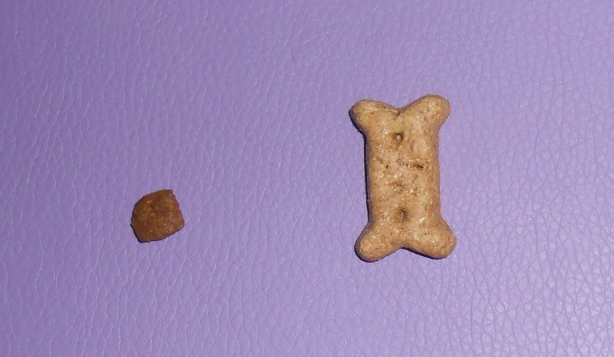 Old Mother Hubbard Crunchy Biscuits come in mini size