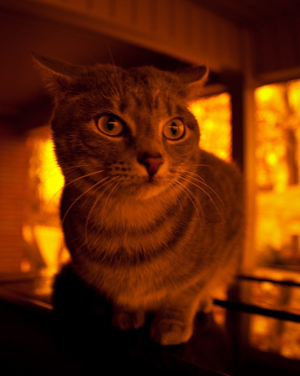 cat-danger