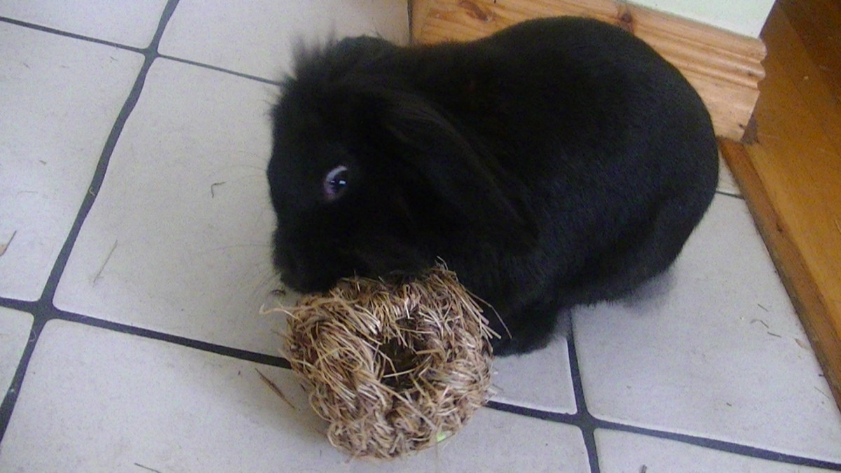 Cocoa's hay ball