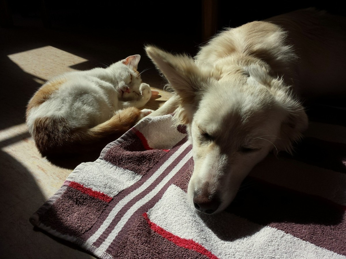 If you have more than one pet in your family, some of the other animals may also show signs of grief and sadness over the loss of an animal friend.