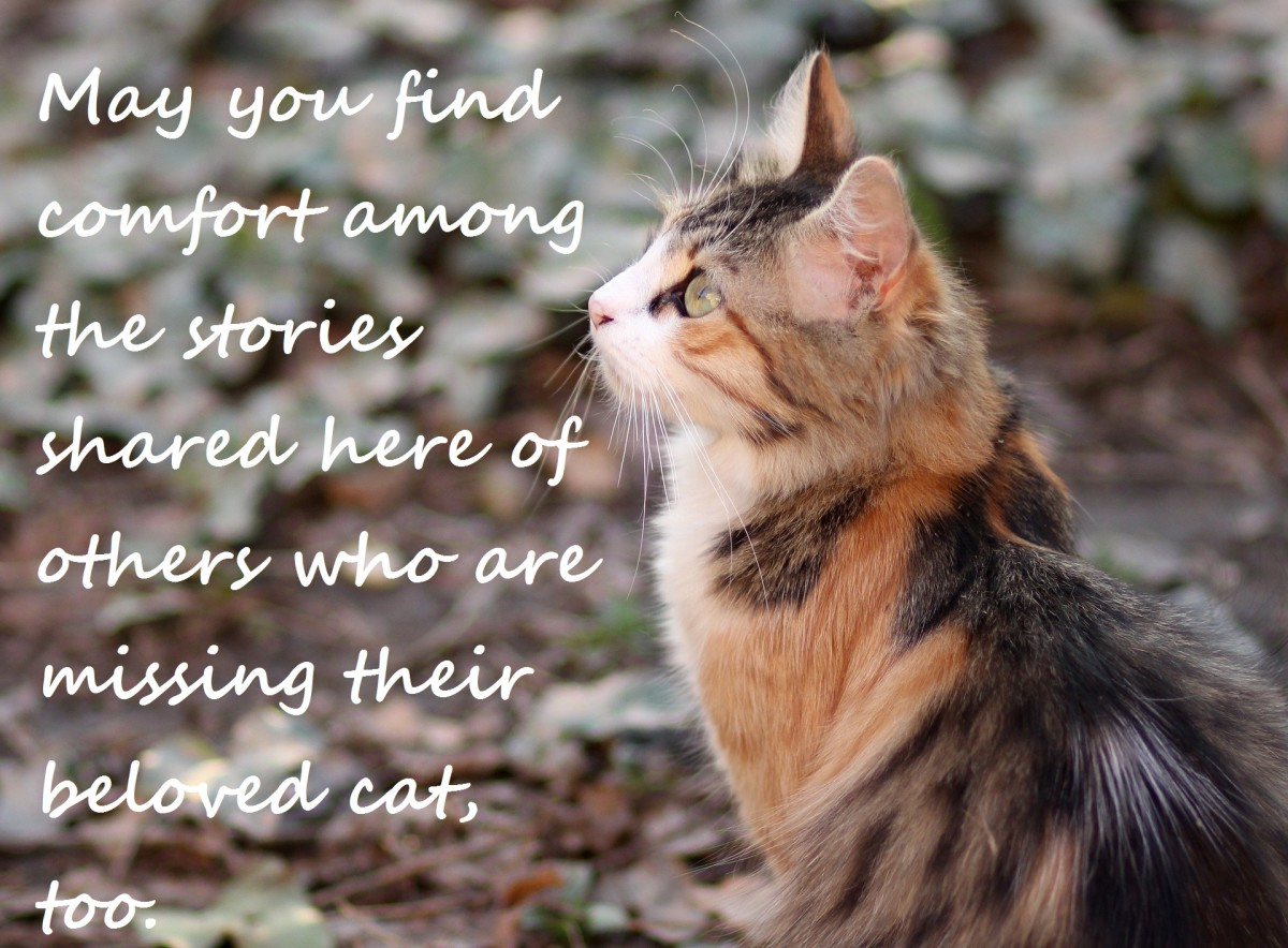 Thank you for being here and supporting others who are feeling sad about the loss of their cat.
