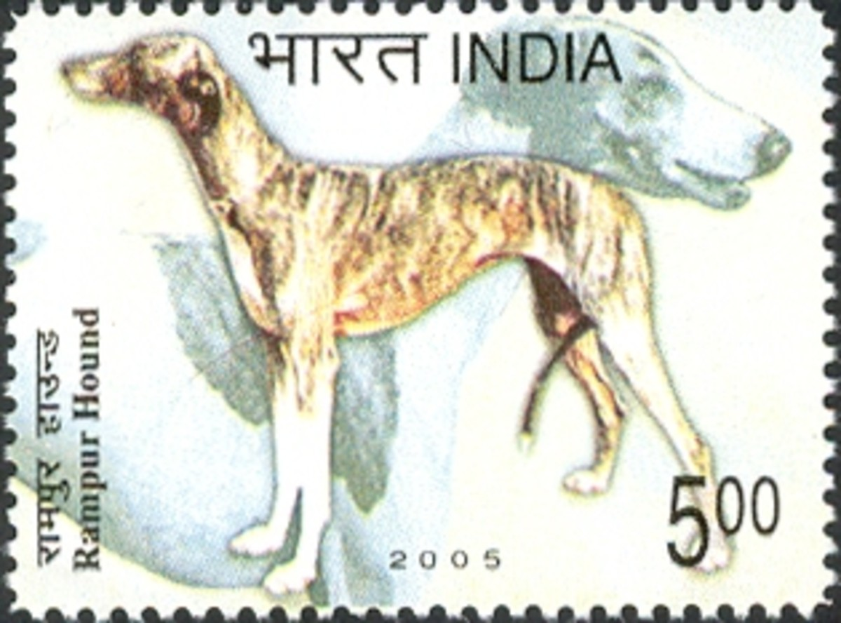 Postal Ticket, Issued in respect of Rampur Hound