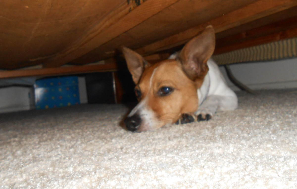 My Jack Russell is really good at hiding, only we weren't playing the game at the time.  She was hiding from the fly swatter.