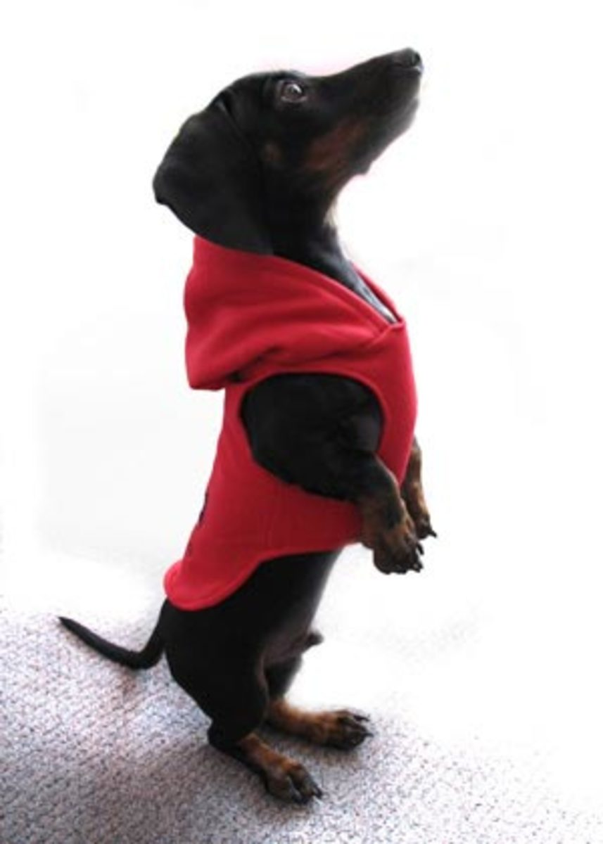 Find many ways to create coats for your dog at the Cottage Market.
