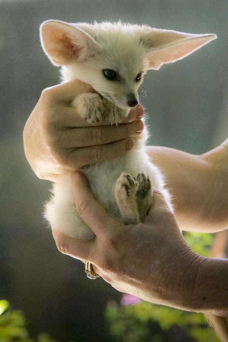 best-exotic-pet